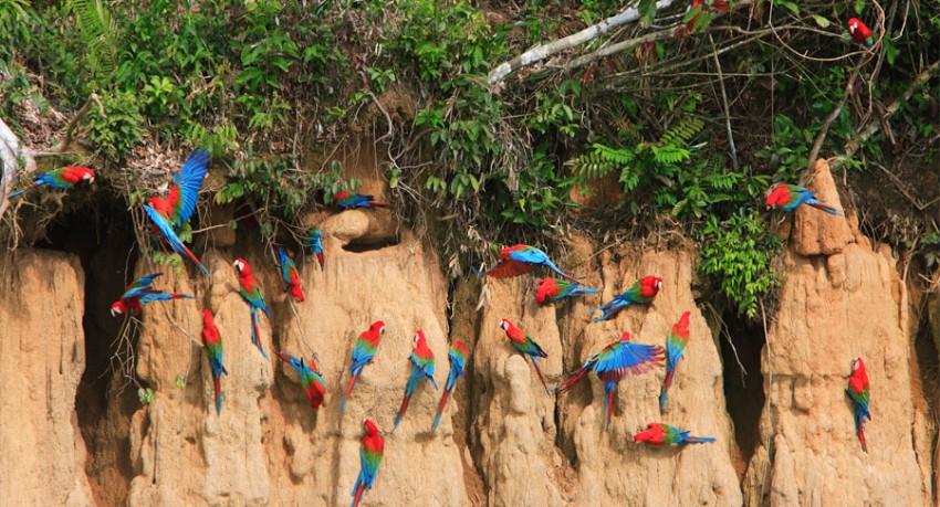 galapagos-islands-amazon-tours
