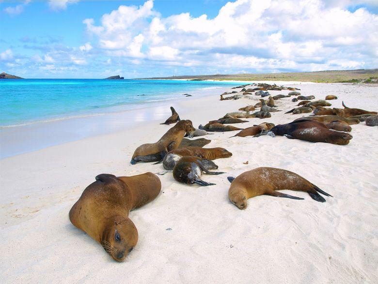 machu-picchu-galapagos-islands-tours