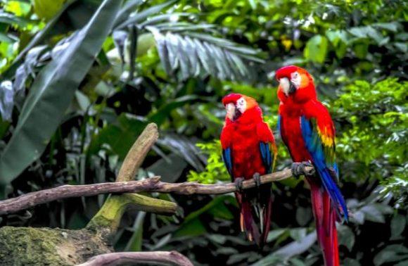 Amazon Cruise – Peru