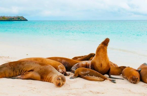Galapagos Islands – Santa Cruz & San Cristobal